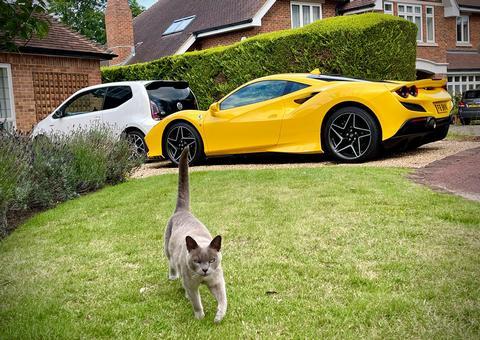 jackal's car